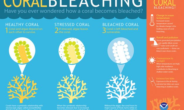 Genetic Engineering Algae to Save our Coral Reefs