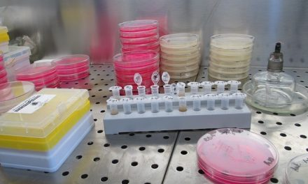 Synthetic Yeast Genome Project Take Major Step Toward Creating Synthetic Life (w/Video)