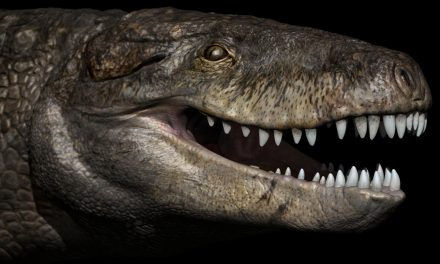 Prehistoric monster crocodile was apex land predator