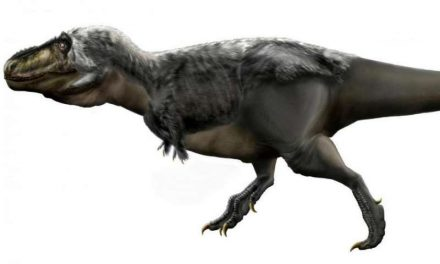 Study Concludes Tyrannosaurus rex Couldn't Run After Prey