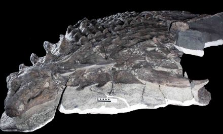Incredibly Well-Preserved Fossil of Tank-Like Armored Dinosaur Borealopelta Markmitchelli