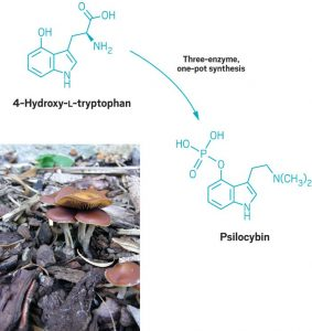 psilocybin synthesis