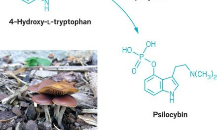Scientists Discover How to Synthesize Psilocybin
